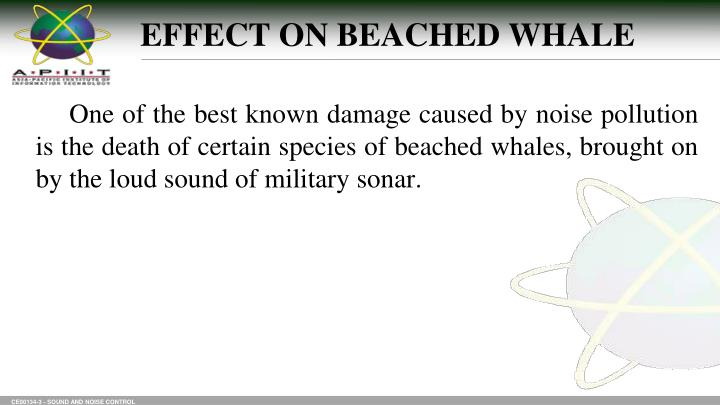 EFFECT ON BEACHED WHALE