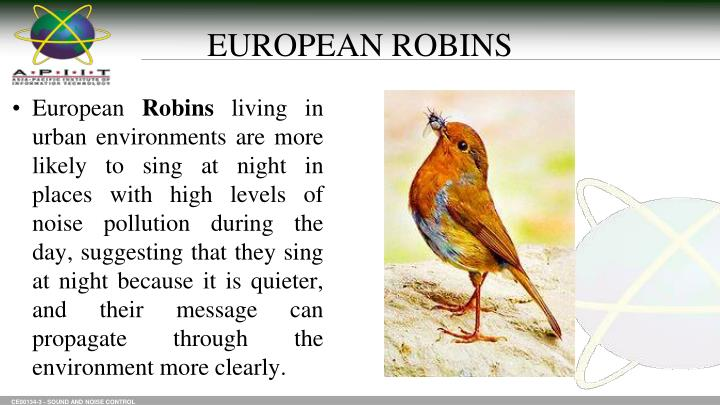 EUROPEAN ROBINS