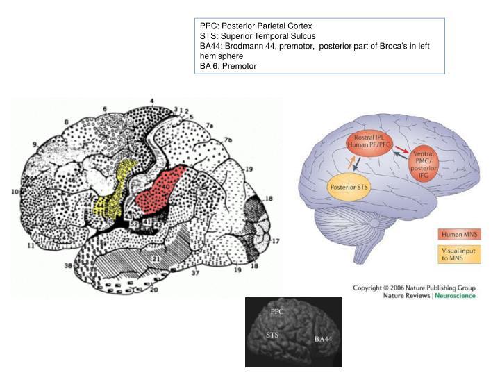 PPC: Posterior Parietal Cortex