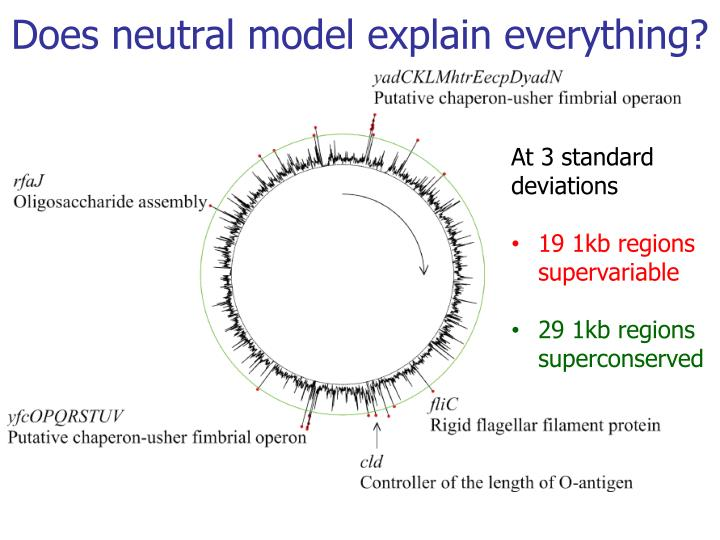 Does neutral model explain everything?