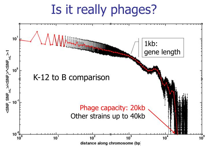 Is it really phages?
