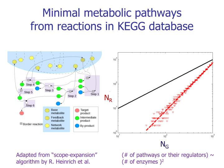 Minimal metabolic pathways