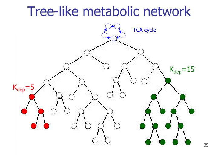 Tree-like metabolic network