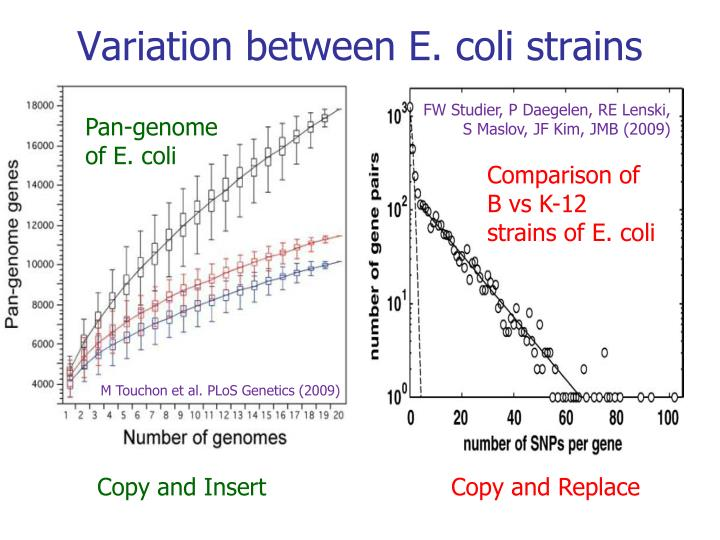 Variation between e coli strains