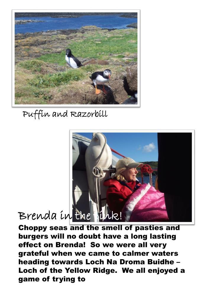 Puffin and Razorbill