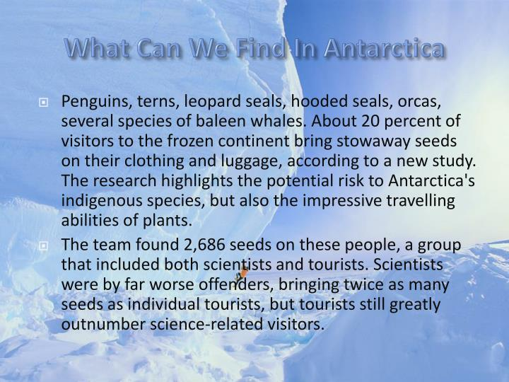 What Can We Find In Antarctica
