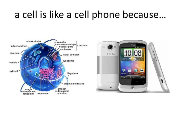 A cell is like a cell phone because