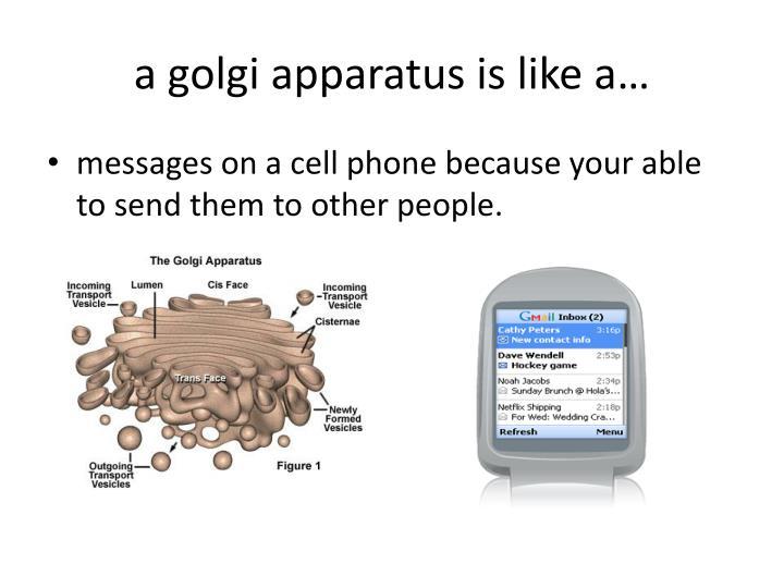 a golgi apparatus is like a…