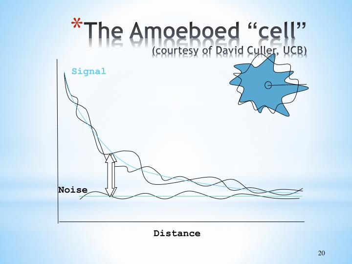 The Amoeboed
