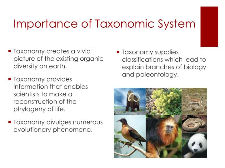 Importance of Taxonomic System