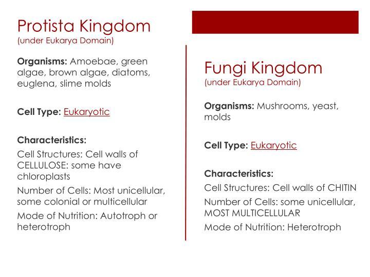 Protista Kingdom