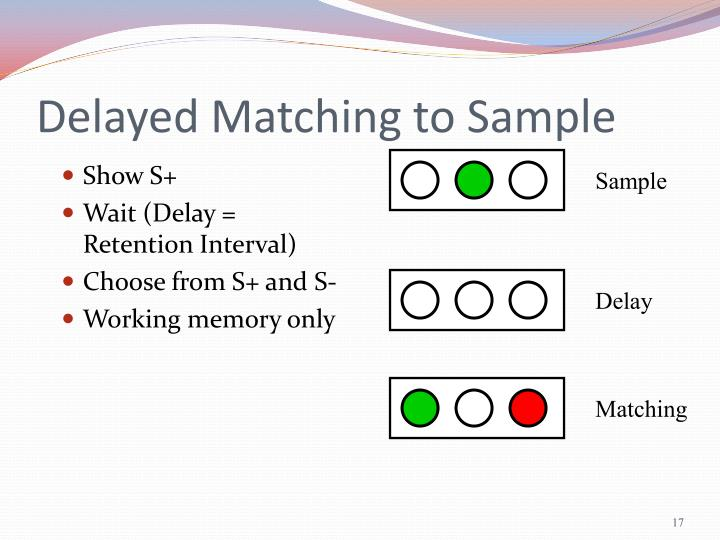 Delayed Matching to Sample