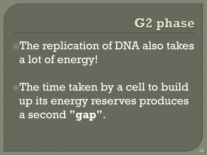 G2 phase