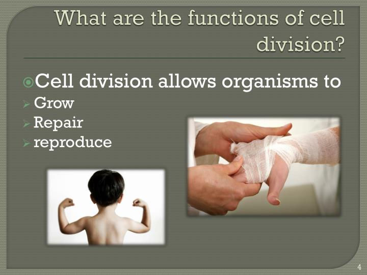 What are the functions of cell  division?
