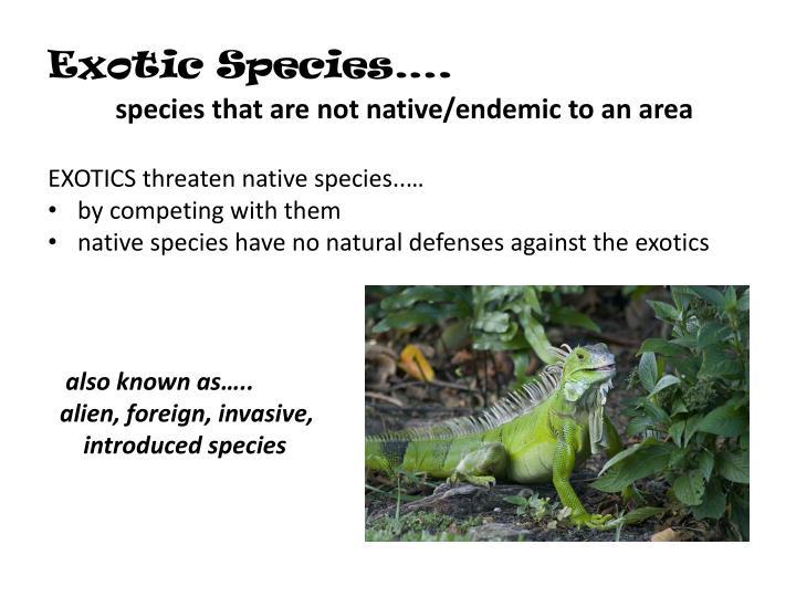 Exotic Species….