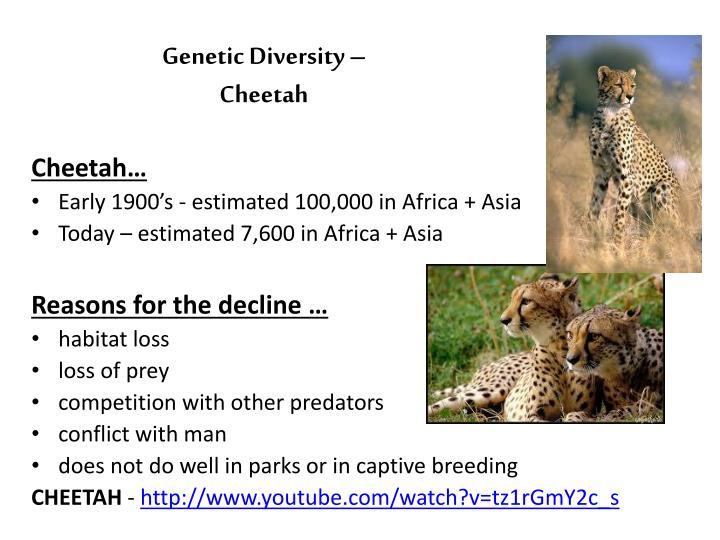 Genetic Diversity –