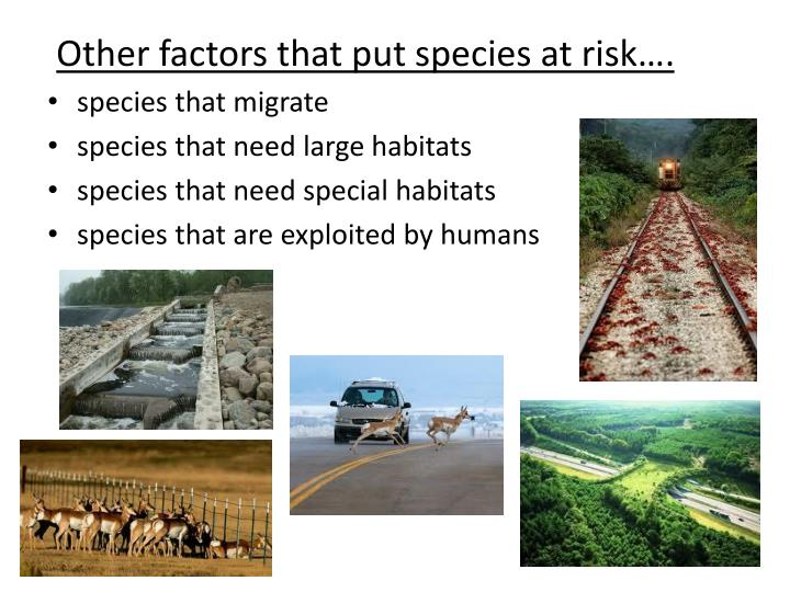 Other factors that put species at risk….