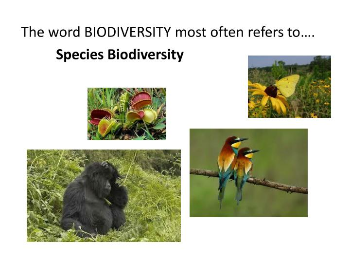 The word BIODIVERSITY most often refers to….