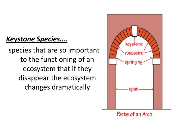 Keystone Species….