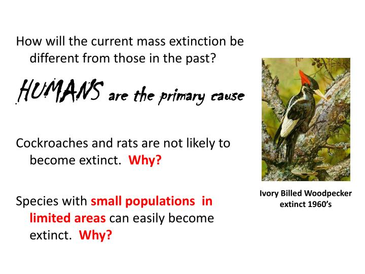 How will the current mass extinction be different from those in the past?
