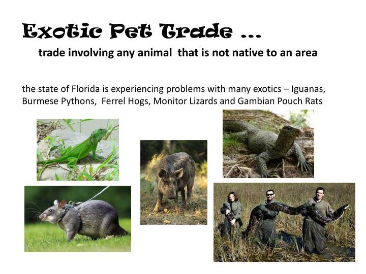 Exotic Pet Trade …