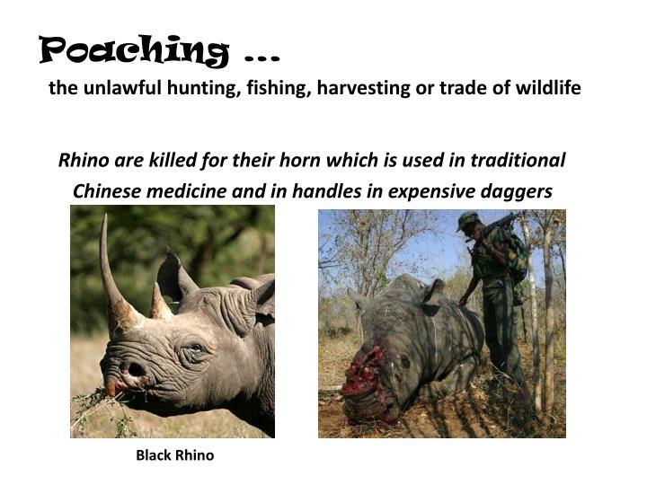 Poaching …