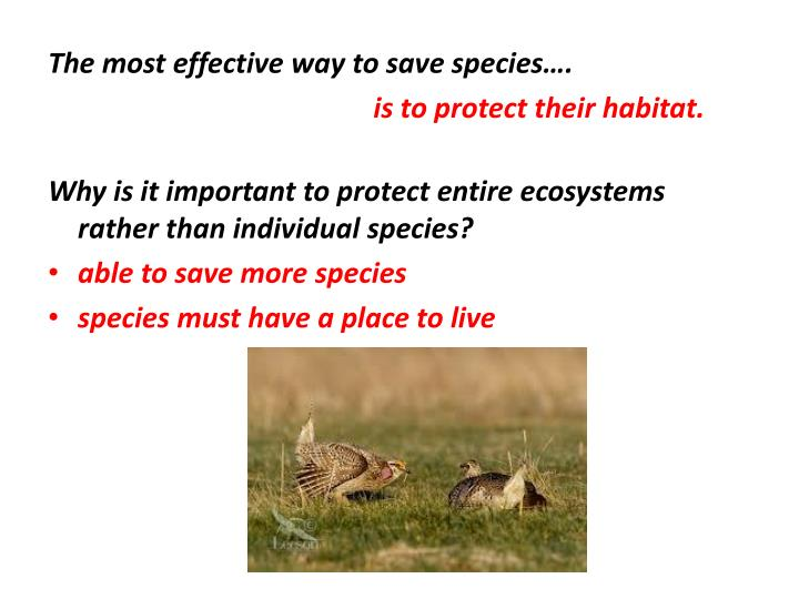 The most effective way to save species….