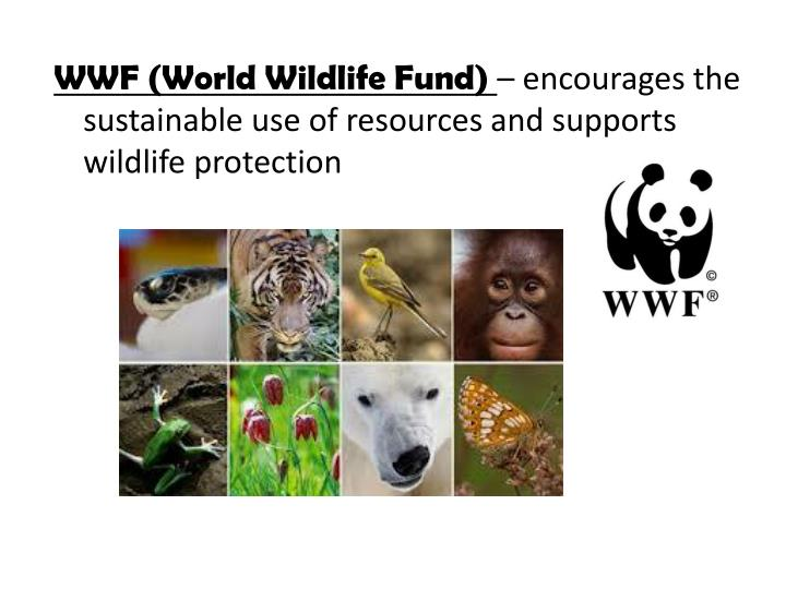 WWF (World Wildlife Fund)
