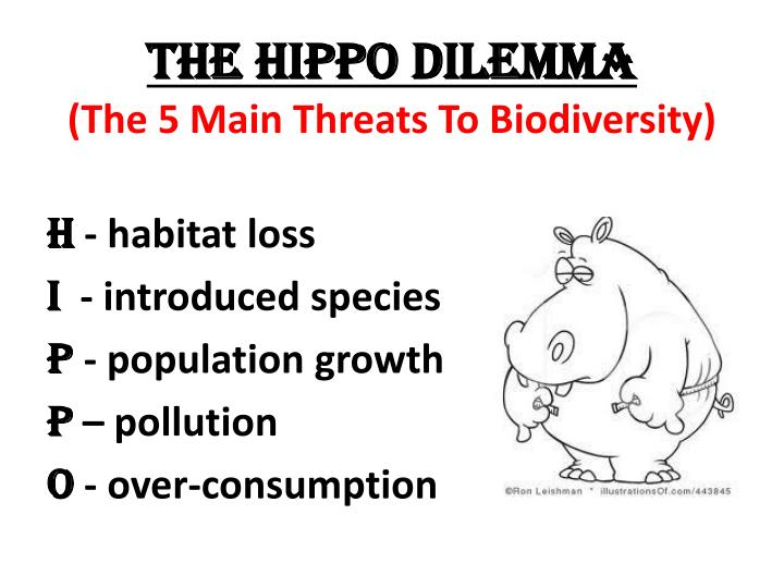 the HIPPO dilemma