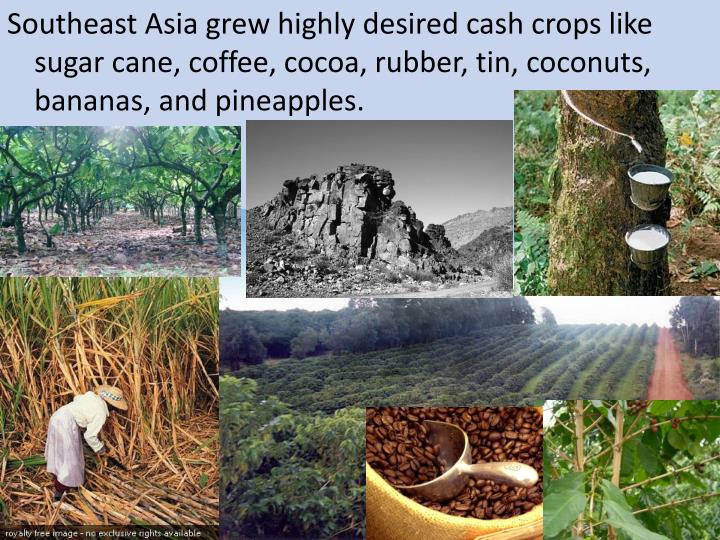 Southeast Asia grew highly desired cash crops like sugar cane, coffee, cocoa, rubber, tin, coconuts, bananas, and pineapples.