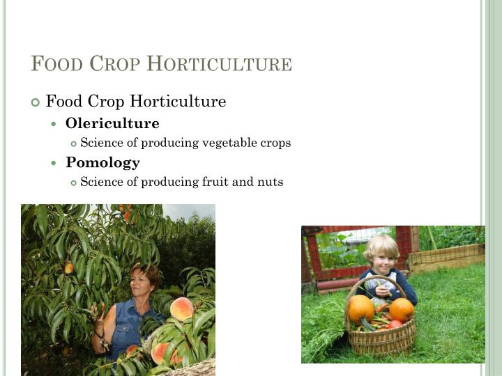 Food Crop Horticulture