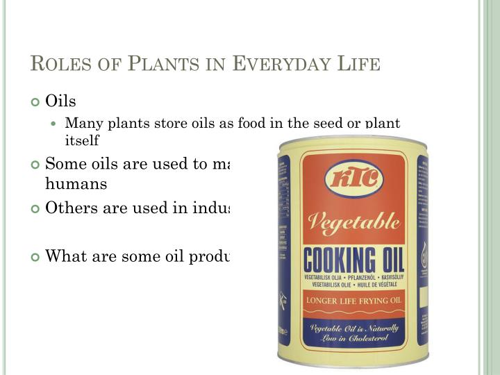 Roles of Plants in Everyday Life