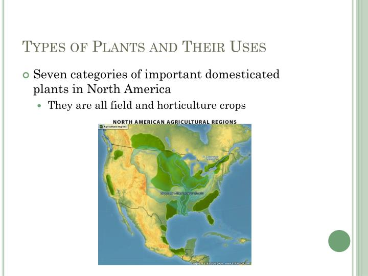 Types of Plants and Their Uses