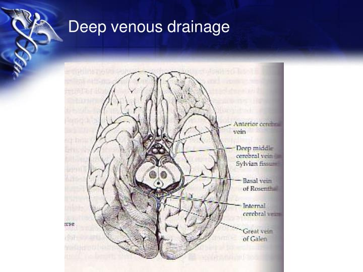 Deep venous drainage
