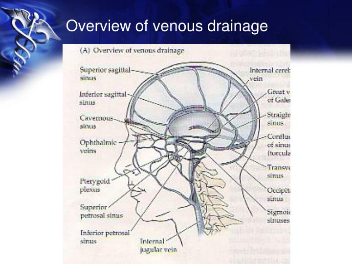 Overview of venous drainage