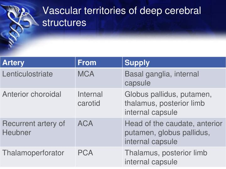 Vascular territories of deep cerebral structures