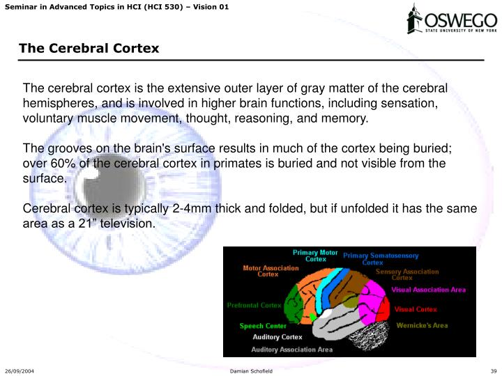 The cerebral cortex is the extensive outer layer of gray matter of the cerebral hemispheres, and is involved in higher brain functions, including sensation, voluntary muscle movement, thought, reasoning, and memory.