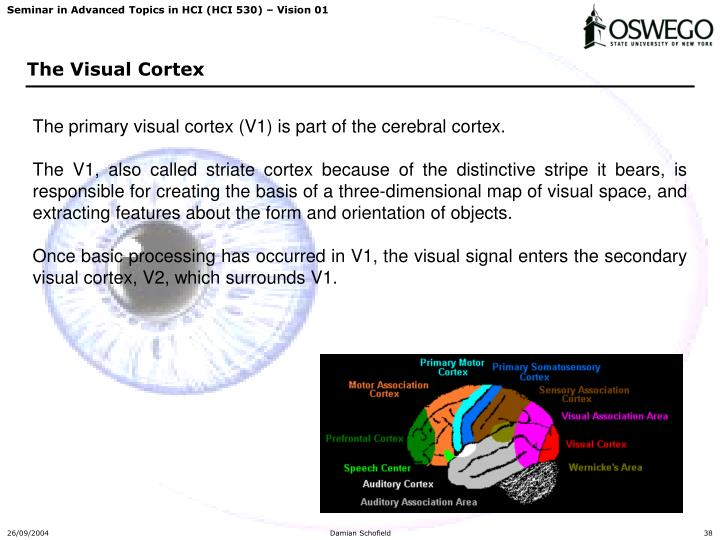 The primary visual cortex (V1) is part of the cerebral cortex.