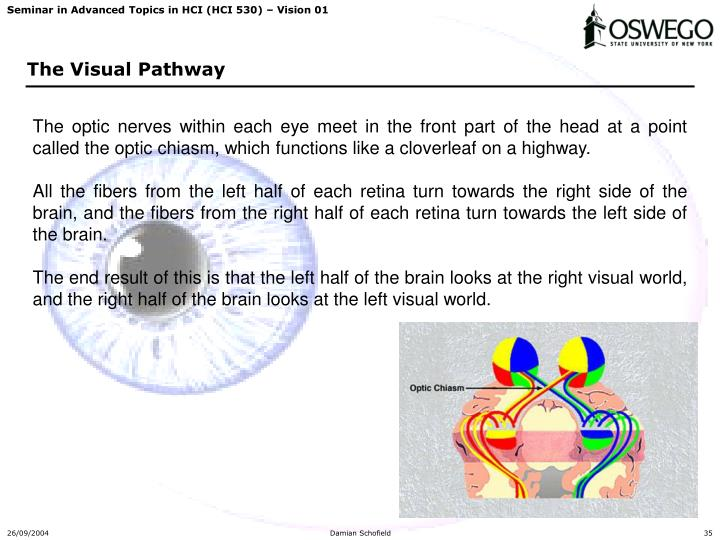 The optic nerves within each eye meet in the front part of the head at a point called the optic chiasm, which functions like a cloverleaf on a highway.