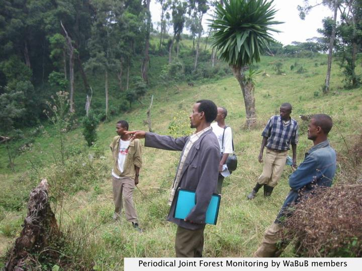 Periodical Joint Forest Monitoring by WaBuB members