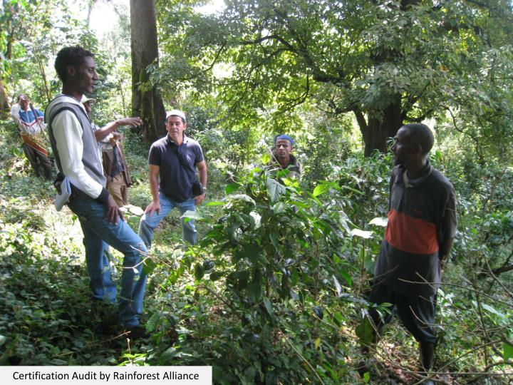 Certification Audit by Rainforest Alliance