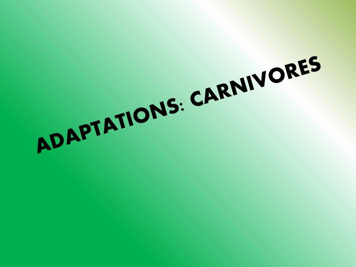 ADAPTATIONS: CARNIVORES