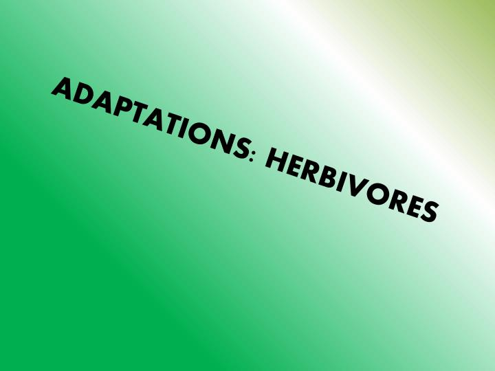 ADAPTATIONS: HERBIVORES