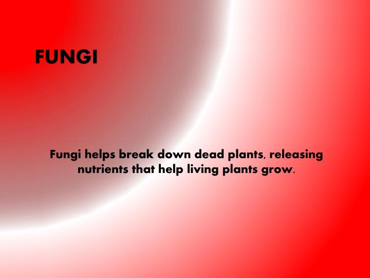Fungi helps break down dead plants, releasing nutrients that help living plants grow.
