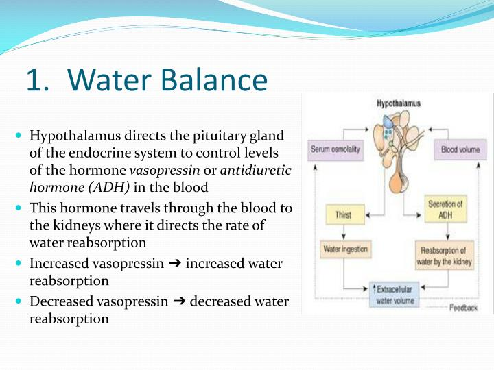 1.  Water Balance