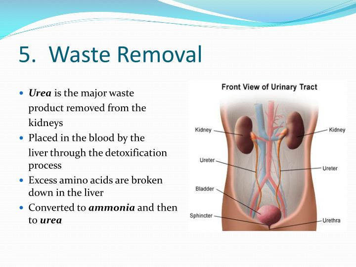 5.  Waste Removal