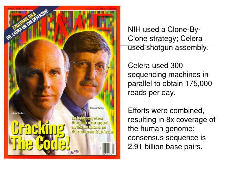 NIH used a Clone-By-Clone strategy; Celera used shotgun assembly.