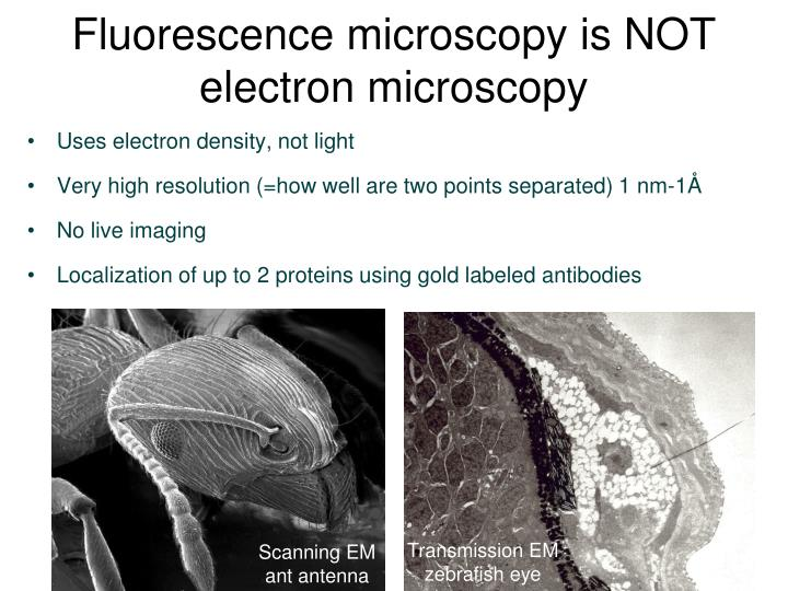 Fluorescence microscopy is NOT