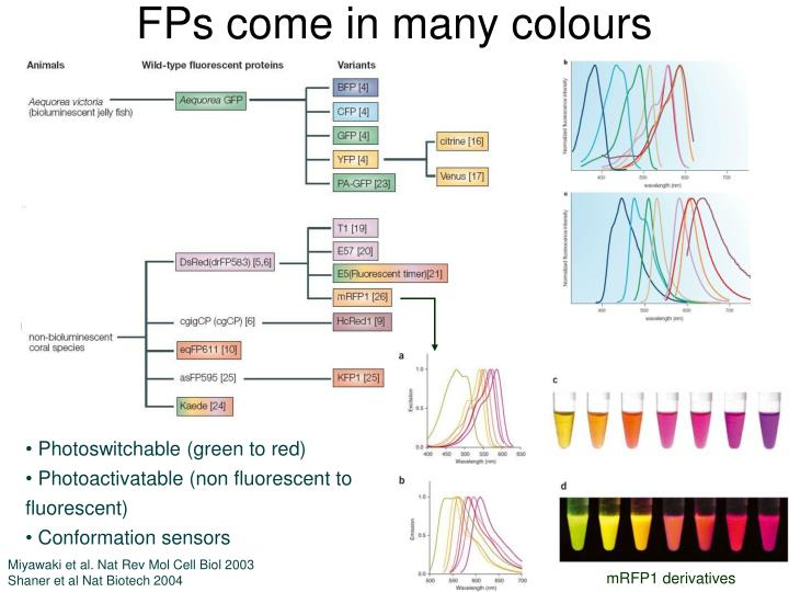 FPs come in many colours