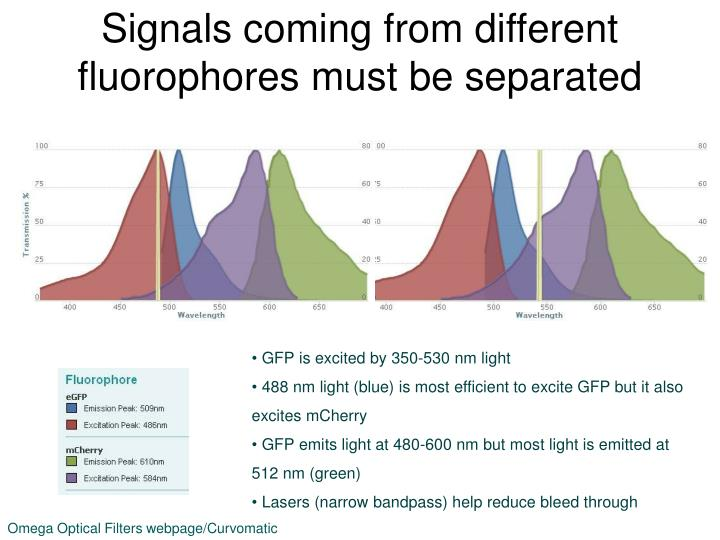Signals coming from different fluorophores must be separated